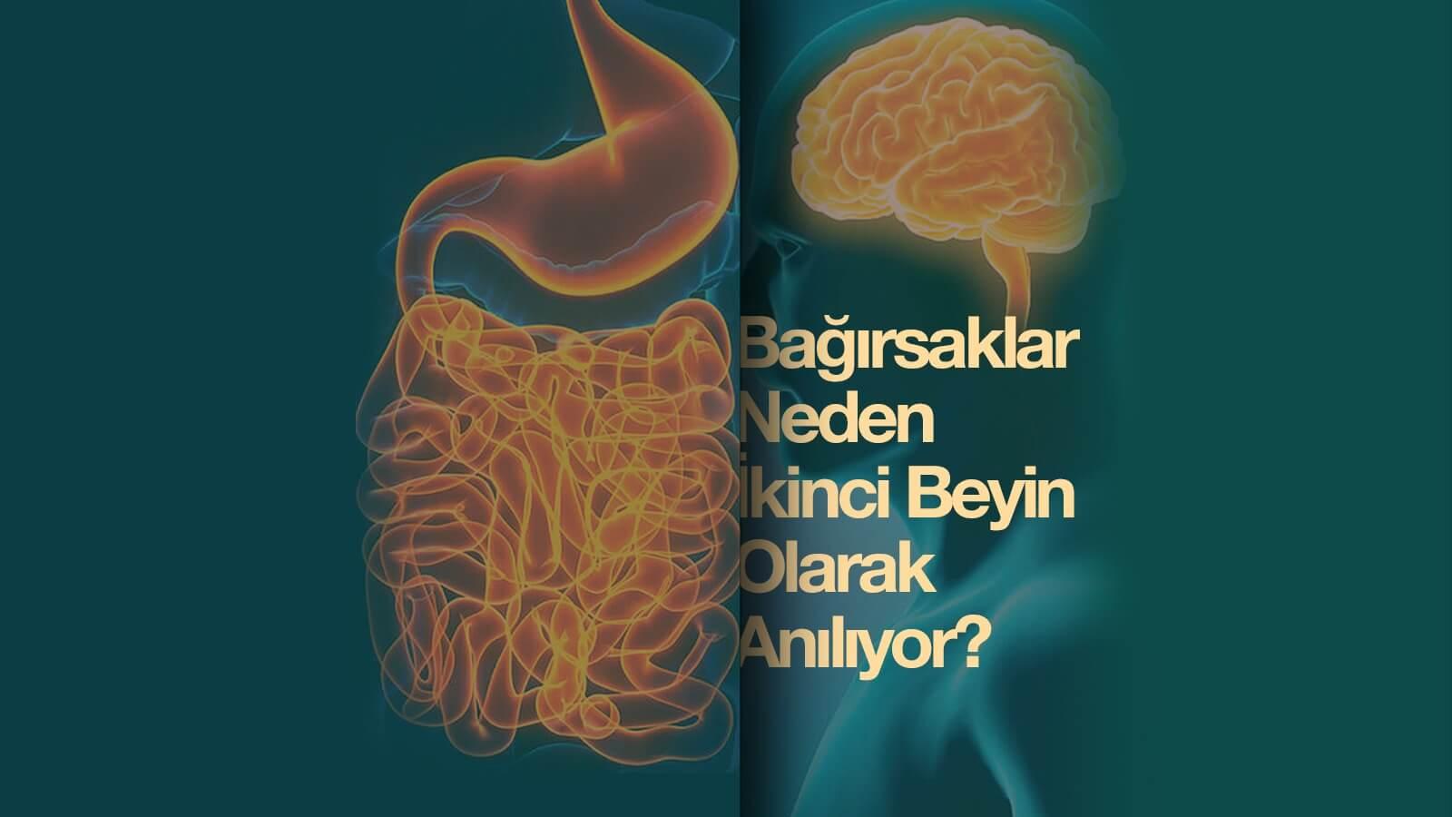 Bağırsaklar Neden ''İkinci Beyin'' Olarak Anılıyor?